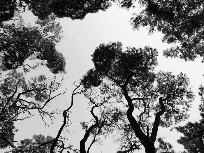 silouettes Trees Black And White Forest Nature_collection Silouette & Sky First Eyeem Photo FirstEyeEmPic