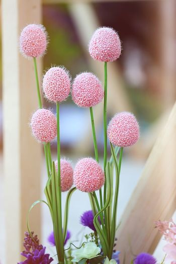 Flower Growth Flowering Plant Plant Freshness Nature Pink Color Backgrounds Background Softness Decoration Blooming Blossom Blur Macro Beauty In Nature Pink Flower Beautiful Nature Natural Macro Photography Bunch Of Flowers Day Lychee Plant Stem