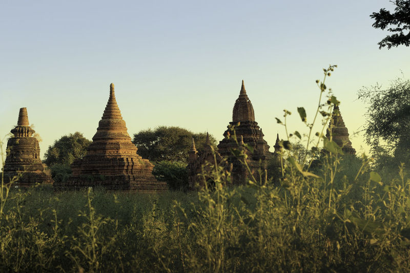 Stupas in Bagan Evening Lights Grass Pagoda Stupa Ancient Architecture Bagan Built Structure Burma Clear Sky Day Grassy Myanmar Nature No People Outdoors Religion Sky Spirituality Temple Travel Destinations