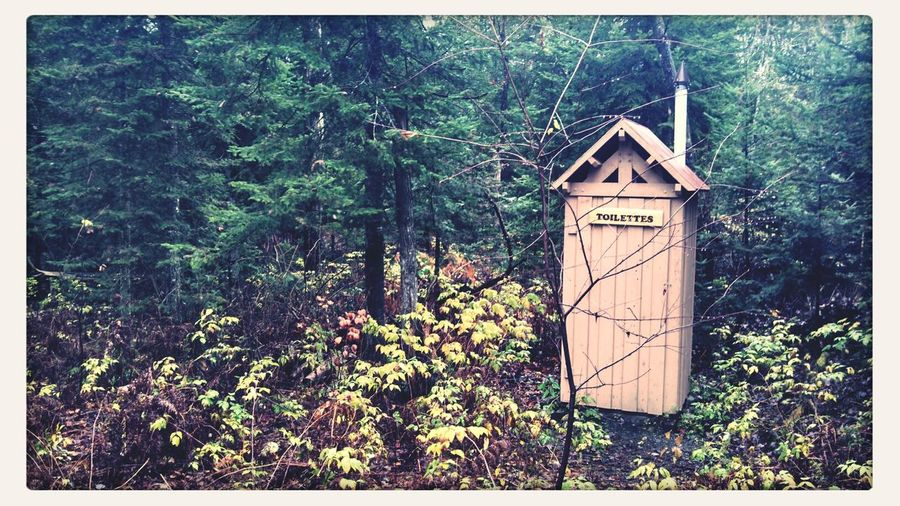 Skrill IT Far From Home Toilet Forest Autumn