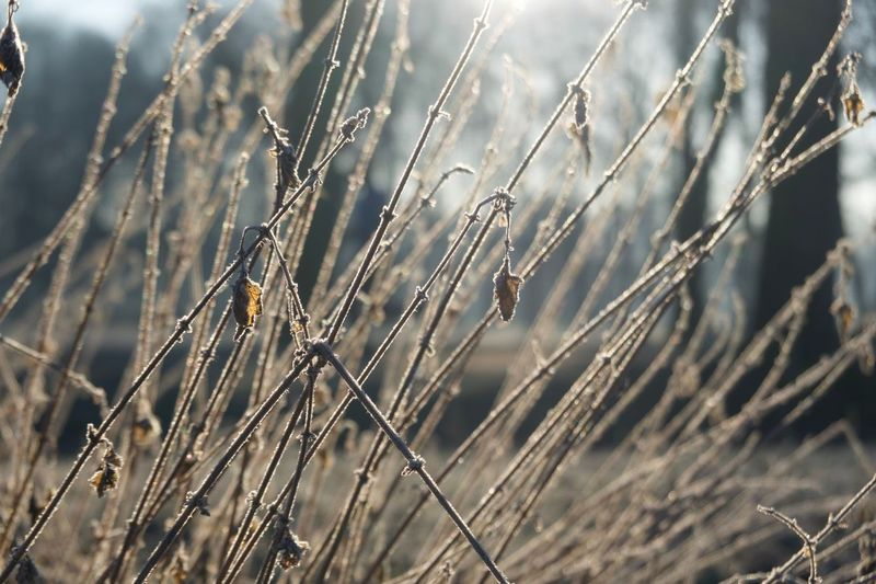 Frozen Plant Growth Nature No People Beauty In Nature Close-up Tranquility Outdoors Field Focus On Foreground Agriculture Land Grass Plant Stem Selective Focus Tranquil Scene Water Stalk Day Sunlight