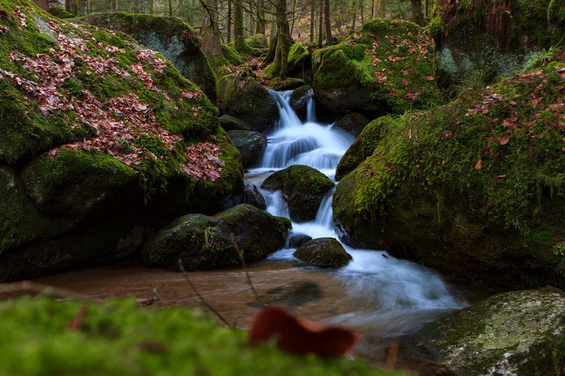 Waterfall Black Forest Green Herbst Schwarzwald Winter Beauty In Nature Black Forest Blurred Motion Day Forest Long Exposure Motion Nature No People Outdoors Rock - Object Scenics Tranquil Scene Tranquility Tree Wald Wasserfall Water Waterfall First Eyeem Photo