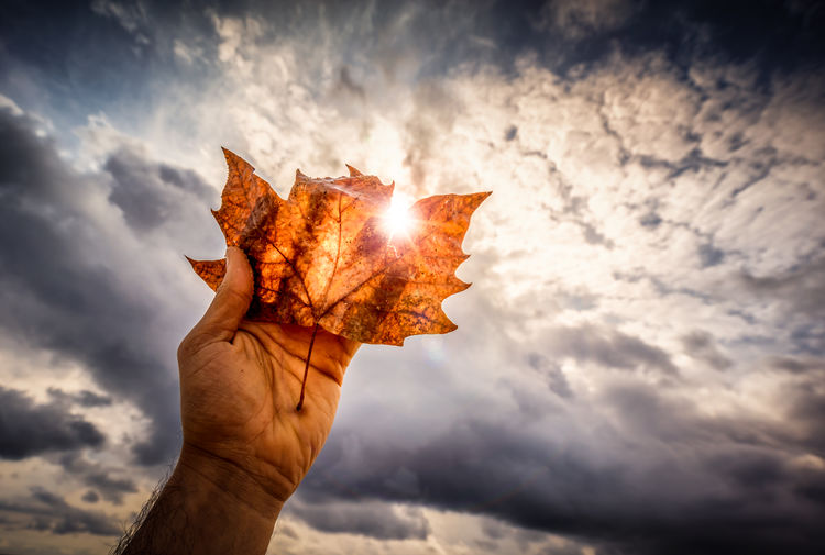Cropped Image Of Man Holding Dry Maple Leaf Against Cloudy Sky