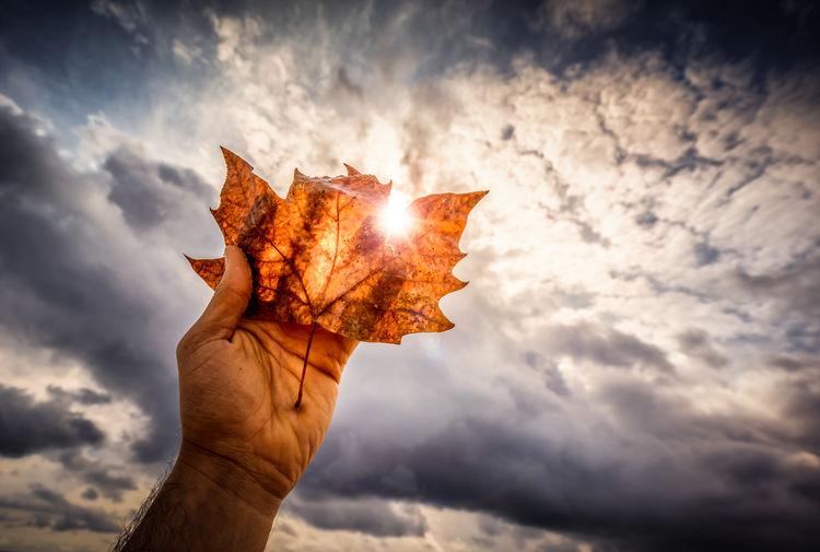 Fall Beauty is here don't miss it 🍂🍁🍂 Fall Beautiful Leaf Barcelona Sun