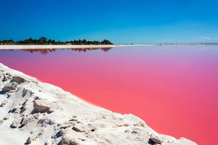 Scenic view of las coloradas lake against clear blue sky at rio lagartos on sunny day