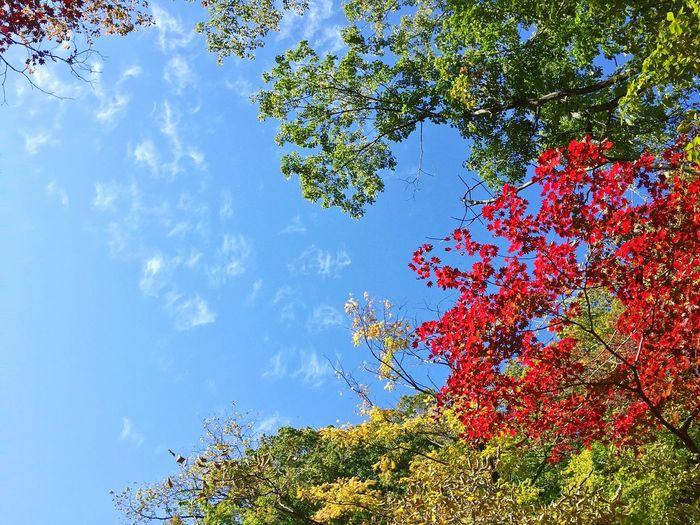 2015  2학년 수학여행 두번째날 Day 설악산 등산🙌 단풍🍁 단풍단풍하지 붉을단 자연 Nature Beauty In Nature Tree Sky Outdoors Growth First Eyeem Photo