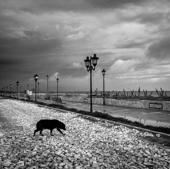 Dog Coastal