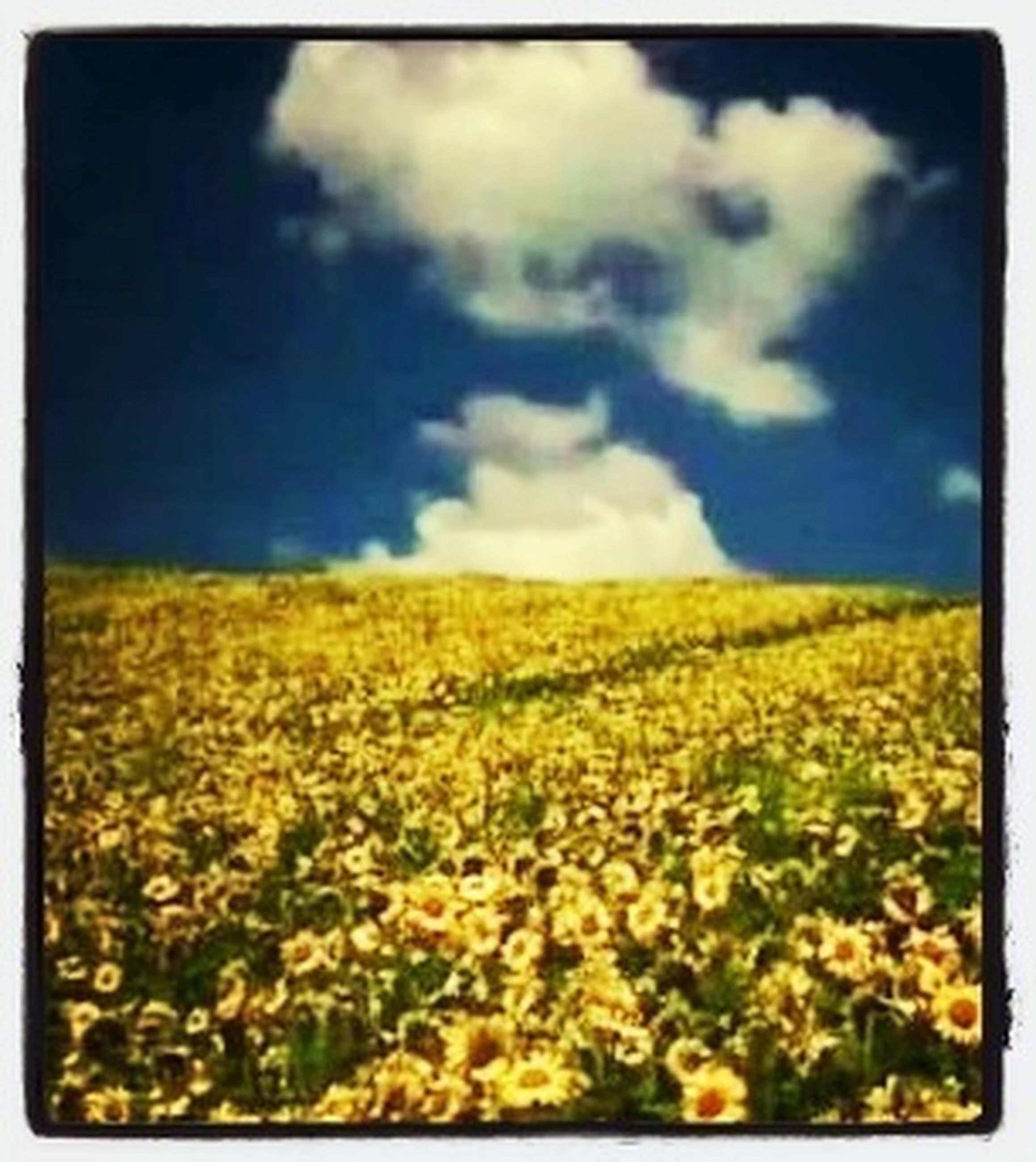 transfer print, yellow, field, sky, landscape, beauty in nature, tranquil scene, auto post production filter, agriculture, rural scene, tranquility, nature, cloud - sky, growth, scenics, flower, cloud, farm, horizon over land, cloudy
