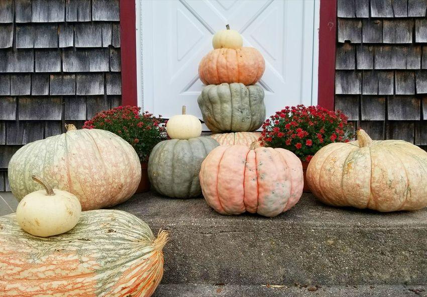 Pumpkins Pumpkin Season Fall_collection Ee_daily
