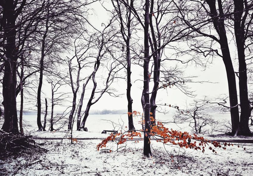 Easter EyeEm Best Shots EyeEmNewHere Eye4photography  Early Morning Easter Let It Snow WoodLand darkness and light Denmark Springtime Tree Snow Sea Winter Cold Temperature Bare Tree Branch Water Sky Shore Tranquil Scene Horizon Over Water Scenics Woods Ocean