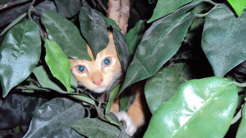 Peekaboo getting into trouble and hiding in the tree as usual in 2010. Pspauly63 Kittylove