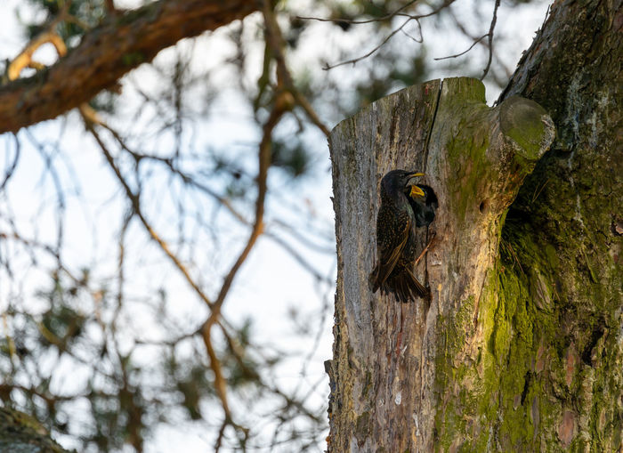 Low angle view of bird on tree trunk