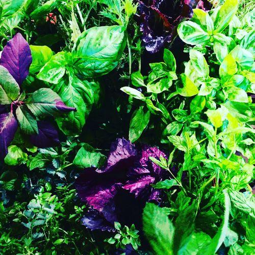Fresh herbs 🍃🍃