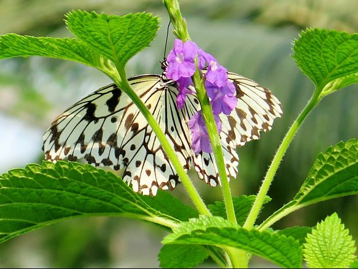 Butterfly Open Wings Butterfly And Flowers Nature Photography Beautiful Nature Naturelover Macro Photography