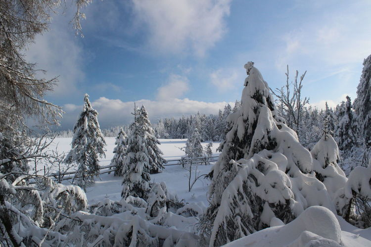 winter impressions of Nationalpark Harz Cold Temperature Snow Winter Nature Harz Brocken Trees Barks Of A Tree Sky Beauty In Nature Cloud - Sky Tree Tranquil Scene Scenics - Nature Tranquility Plant Covering No People Day White Color Non-urban Scene Frozen Environment Snowcapped Mountain
