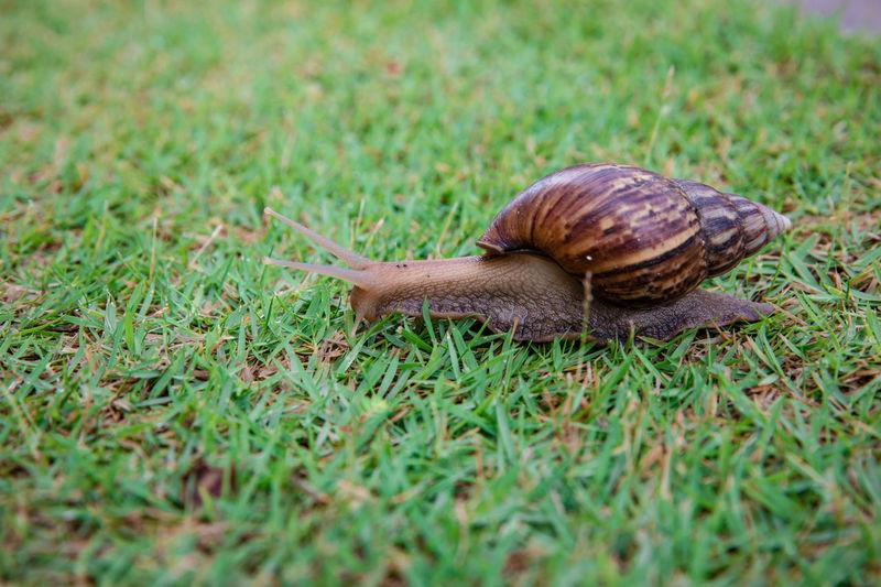 Snail on a field