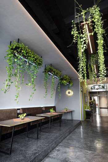Potted plants on table in illuminated building