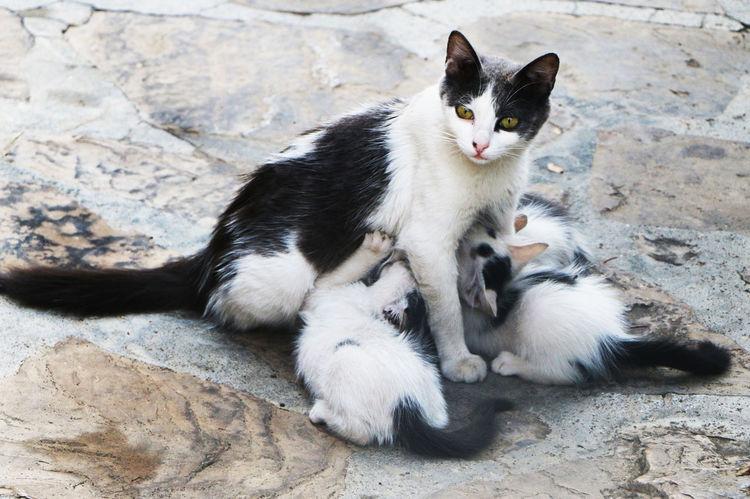Animal Themes Cat Domestic Animals Domestic Cat Feline Mammal One Animal Relaxation
