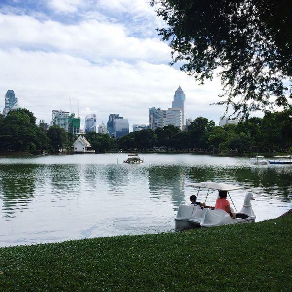 Bangkok Park Lumpini Park Swan Swan Lake Lake Skyline Skyscraper Nature In The City