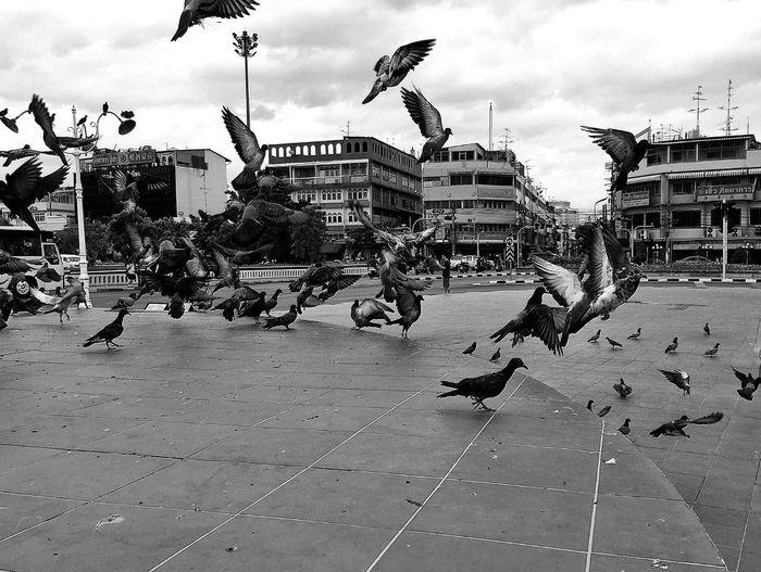 Bird flying over city against cloudy sky