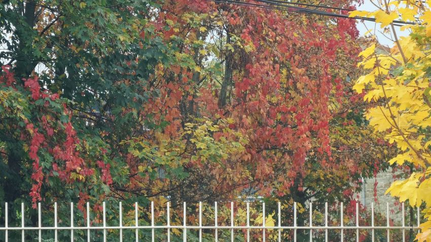 Multi Colored Outdoors No People Beauty In Nature Autumn Leafs Red Gold And Green