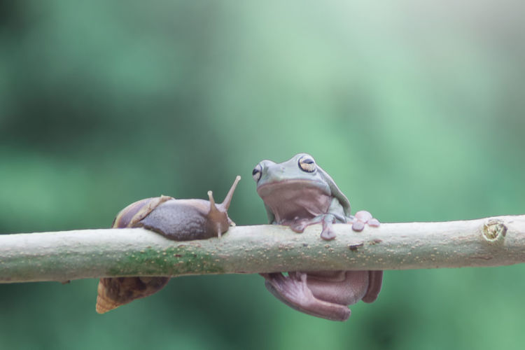 tree frog and mantis Animal Themes Animal Animal Wildlife Animals In The Wild Vertebrate One Animal No People Focus On Foreground Close-up Bird Nature Branch Day Outdoors Selective Focus Perching Tree Rodent Small