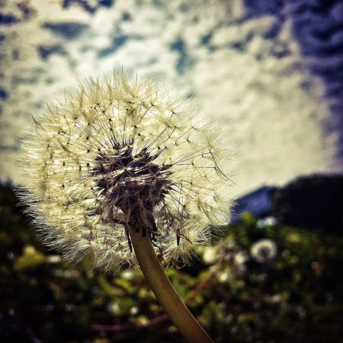 just dandy... Nature Iphone6 Flowers