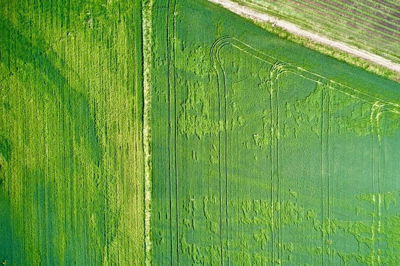 Italy, Mantua: fields Agriculture Color Green Day Day Light Day Time Daylight Daytime Drone  Field From A Distance From Above  High Angle View Horizontal Italy Landscape Landscapes Lines Looking Down Mantova Mantua Nature No One No People Nobody Outdoor Outdoors Outdoors Parallel Spring Spring Season Springtime Tracks Vegetation Aerial View Drone Photography Crop  Green Color Plant Growth Rural Scene Crop  Full Frame Backgrounds Environment Beauty In Nature Pattern Plantation Grass Land Tranquility