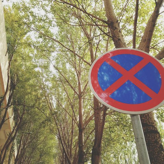 Tree Low Angle View Circle Day Road Sign No People Communication Branch Outdoors Red Green Color Growth Tree Trunk Nature Close-up p