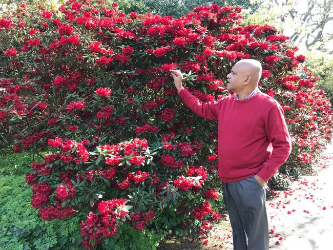 Plant Flower Flowering Plant One Person Growth Standing Red