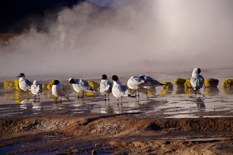 Enjoying the upcoming sun after a cold night in the atacama at around 5000m. Andes Atacama Desert Birds Chile High Attitude  Hot Springs Morning Steam Surise Water