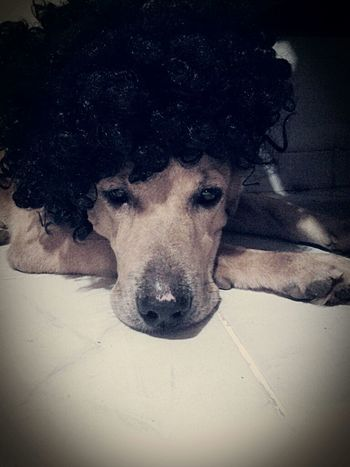 I Love My Dog❤ Playing With My Dog My Model Wig Fun Pets Brasil Dog❤ Funny Moments Thoughtful