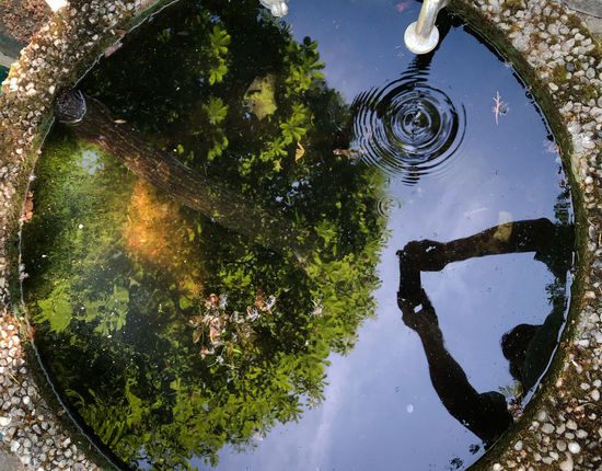 Day Geometric Shape High Angle View Nature Outdoors Planet Earth Plant Reflection Sky Standing Water Tree Water