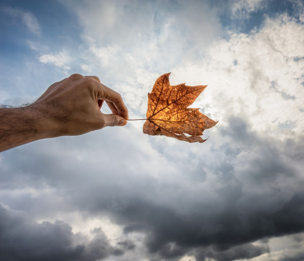 Cropped Image Of Man Hand Holding Maple Leaf Against Cloudy Sky