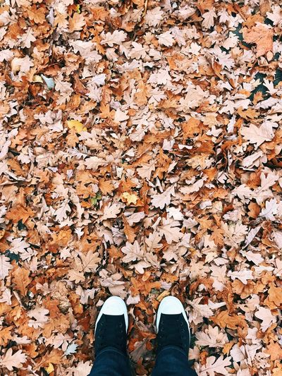Low section of person standing on fallen autumn leaves