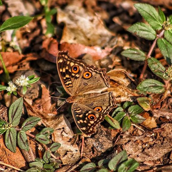Butterfly Insect Nature Beauty Design Patterns Wonders Pw_camouflageblend Thane India Needs identification on species name