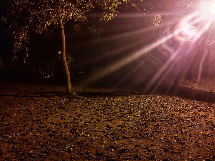 Sunlight falling on autumn leaves on footpath