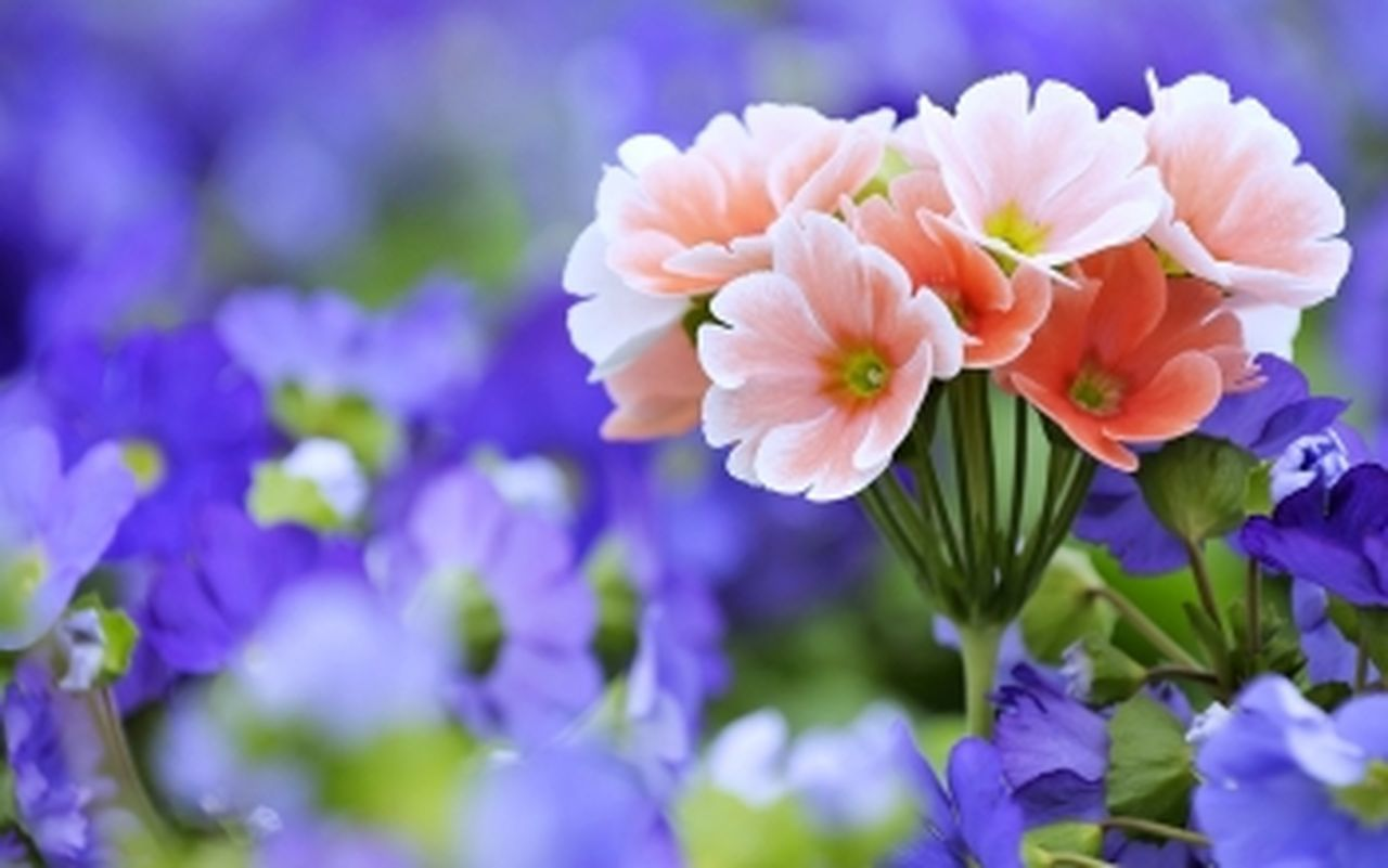 flower, fragility, beauty in nature, nature, petal, freshness, growth, flower head, plant, no people, blooming, close-up, focus on foreground, outdoors, springtime, day