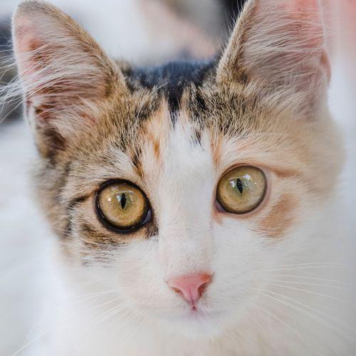 EyeEm Selects very bright close upportrait of a white calico cat. Cqt Cat Portrait Portrait Smile Curious Cat Curiosity Eyes Wide Eyes Pet Portraits