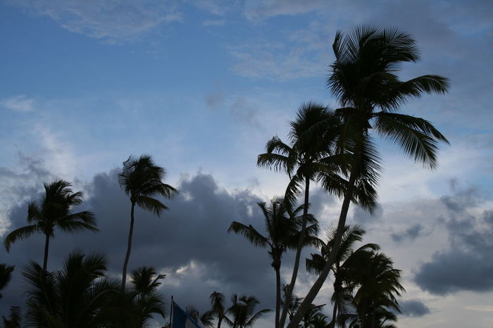 2007 Dominican Republic Dominicus Beach Cloud - Sky Day Nature No People Outdoors Palm Tree Scenics Sky Tree Tree Trunk