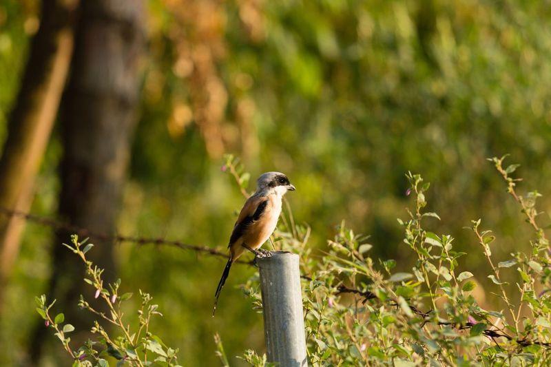 Animal Wildlife Animal Themes Animal Animals In The Wild Bird Vertebrate One Animal Nature No People Outdoors