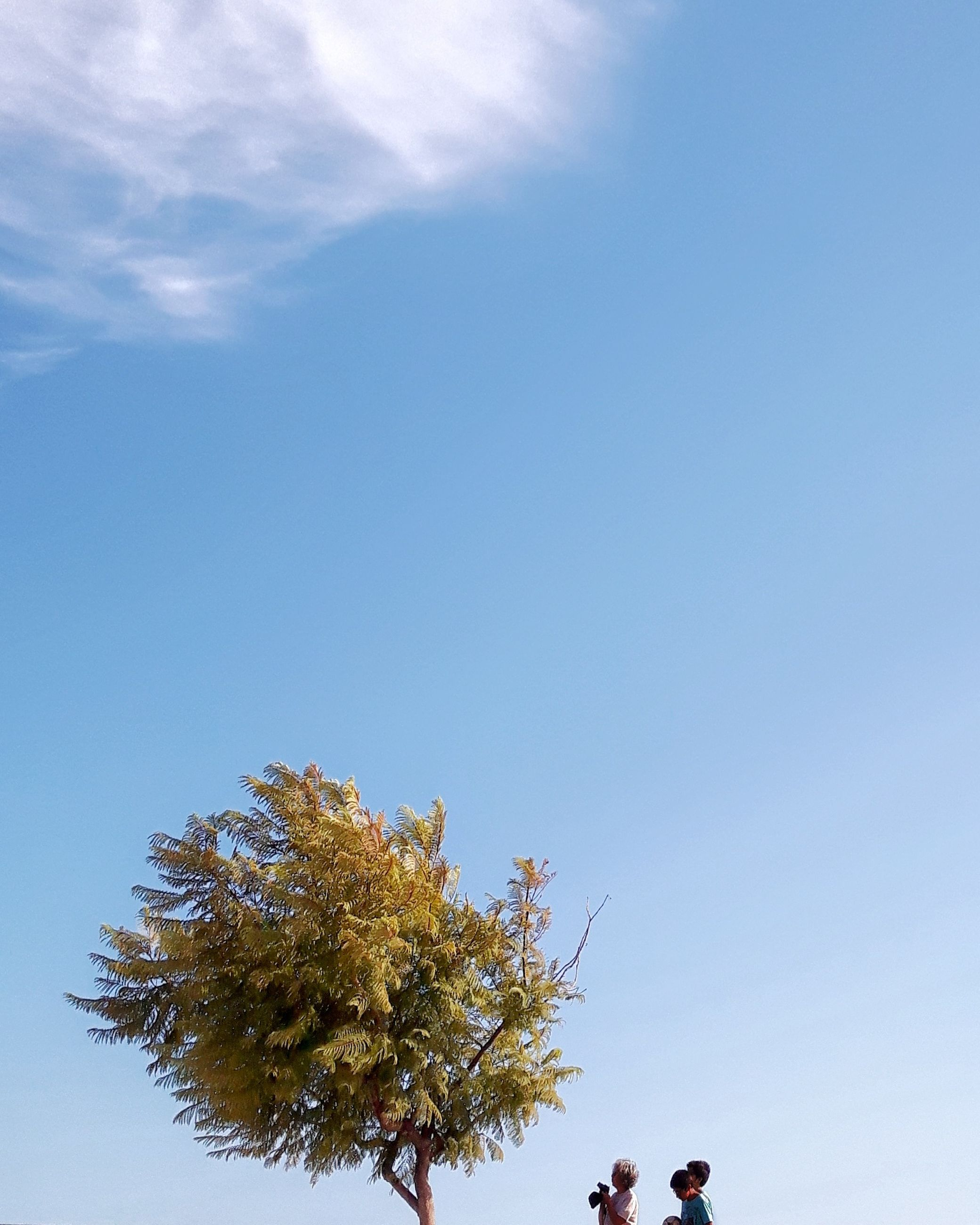 tree, nature, day, low angle view, beauty in nature, growth, leaf, outdoors, sky, blue, clear sky, no people