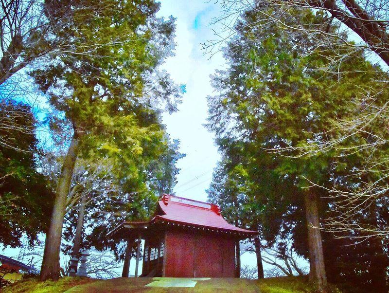 Inarishrine Inari Tree No People Architecture Sky