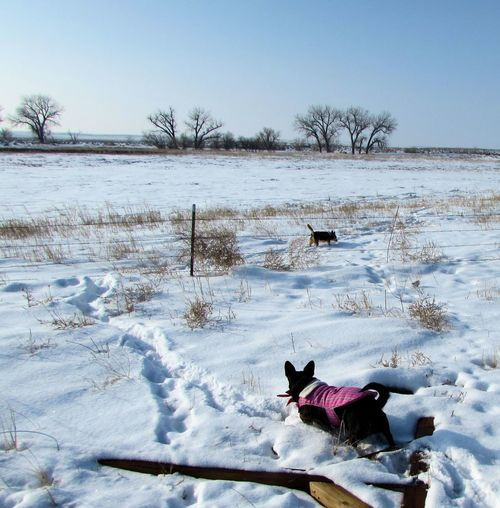 Dogs playing in snow covered field