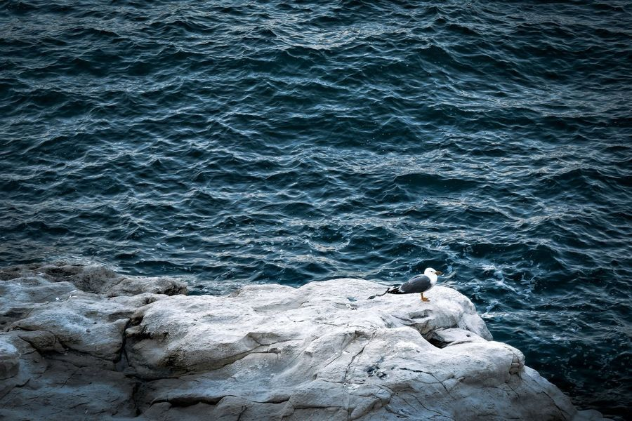 High Angle View Water Sea Beach Nature Day Rippled Sand Birds Birds Of EyeEm  Beauty In Nature Wave Close-up Coastline Sea And Sky Light And Shadow Nature Travel Tourism Beauty In Nature Horizon Over Water Nikond3300 Rock - Object Bird Bird Photography