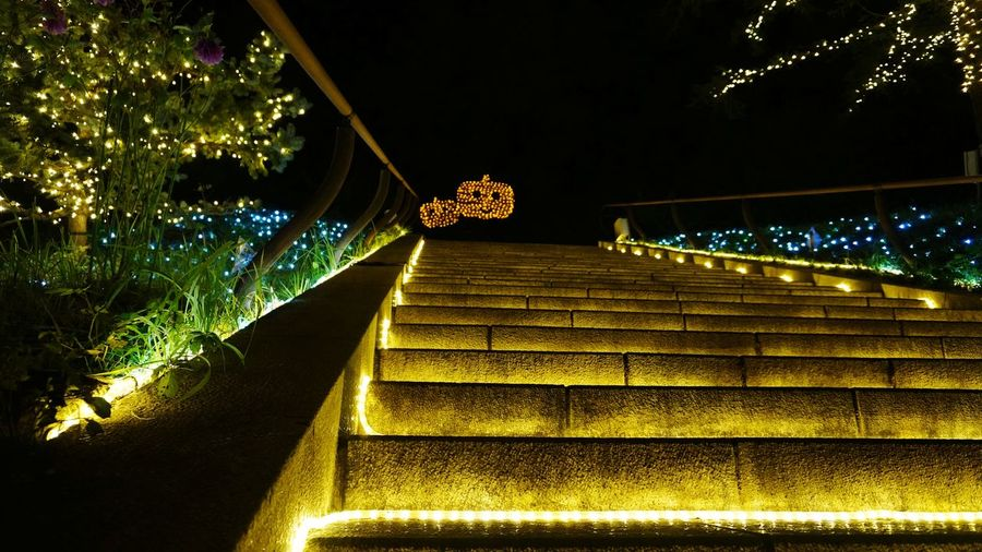 Illuminated Tree Steps Steps And Staircases Christmas