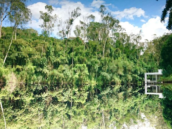 Better Look Twice Reflection Water Nature Lake Tree Beauty In Nature Tranquility Standing Water Tranquil Scene Day No People Green Color Outdoors Inverse Brasil Brazil Museum Of Modern Art Inhotim Minas Gerais