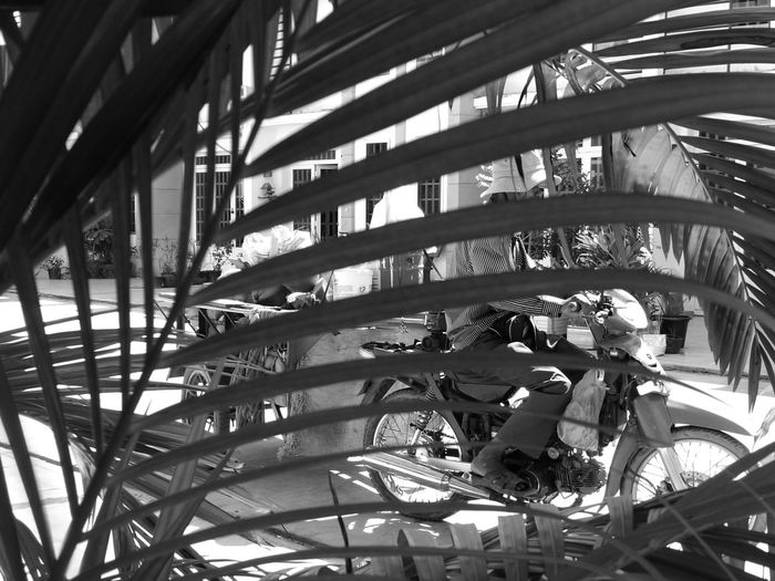 Framing Coconut Business Hard Working Black And White Monochrome Waiting Game