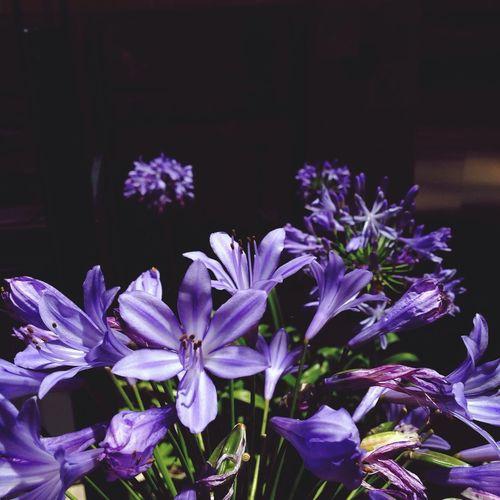 Pantone Colors By GIZMON Violet