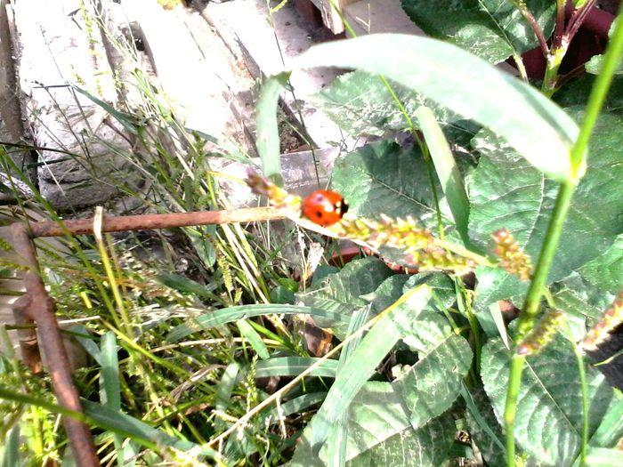 Plants Ladybug Green Grass Ladybeetle Eyeem Market Wolfzuachis